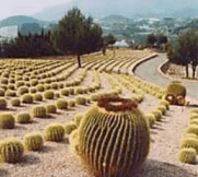 Cactuslandia
