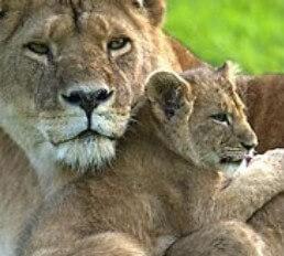 Vergel safaripark